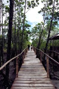 Bakhawan-Eco Park